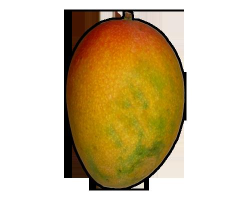FRUITS MANGO Learn about Mango