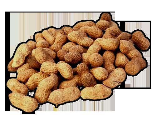 Nuts Peanuts Learn About Peanuts Peanuts Lessons