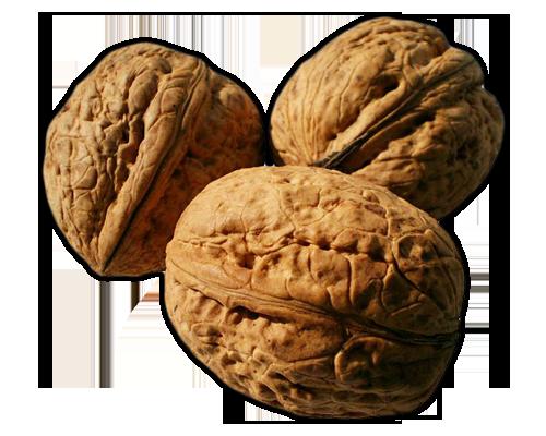 NUTS WALNUTS Learn about Walnuts