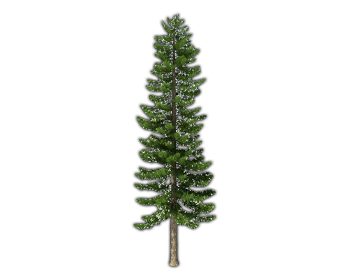 Click Here To See Pine Tree Album